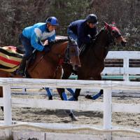 ハマオリ、馬体写真