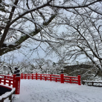 雪の弘前公園
