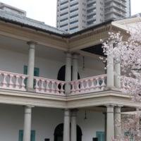 造幣局桜の通り抜け 2017年