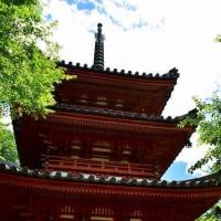 京都・三室戸寺の紫陽花・・・3