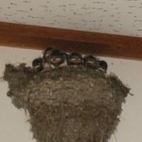 小さな巣に