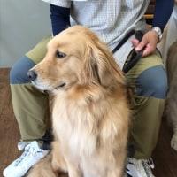 犬の出張シャンプー in 羽生牧場