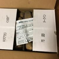 北海道のジャガイモ