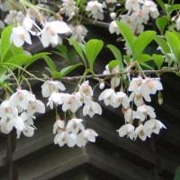 赤塚植物園ーお散歩(その4)