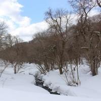 木谷沢からスノーシュー散策