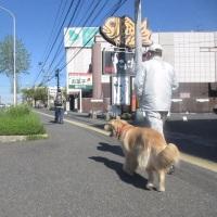 朝散歩 お父さん大好き! 170428