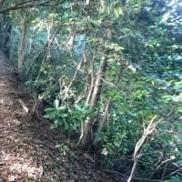 林道歩きの楽しみ