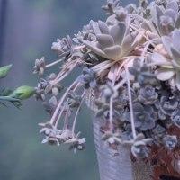 サボテン2種、1つは開花しそう