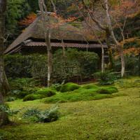 2016 そうだ京都、行こう~ (5)大覚寺~嵐山周辺