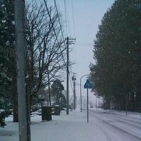 また雪・・・・・・・