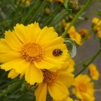 サボテンの花を見ました・・・