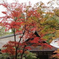 南禅院の紅葉