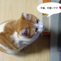 子猫好き!