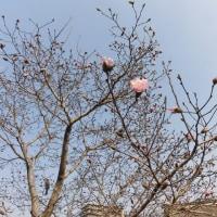 春が近いようで、、、