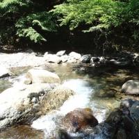 初夏の渓流1