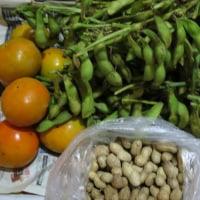 秋の味覚「松茸」・「黒豆枝豆」・「柿」・「生落花生」♪