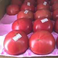 今日は信州から豆腐や野菜、キノコが届きました。