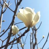 春が来た!