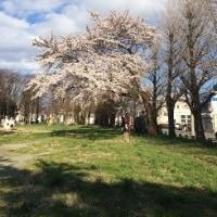 桜が咲きました☆