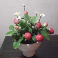 """鉢植え?の""""苺"""""""