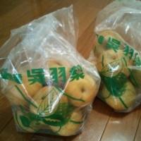 今年も梨の季節になりました