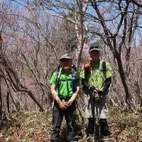 袈裟丸山でアカヤシオ (小丸山まで)