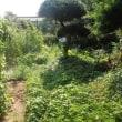ゴーヤと柿とカマキリ