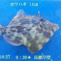 笑転爺の釣行記 10月27日☀☁ 長瀬・久里浜