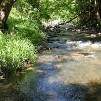 濁りのある渓流にて