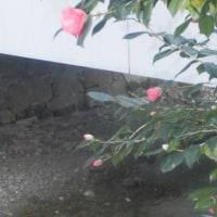 祇園・白川(3月9日撮影)