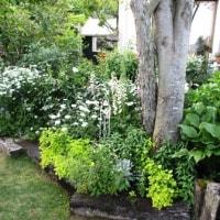 今日の庭 2017年5月22日