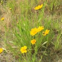 土手のうへ夏やはらかに始まりぬ野花の声してひとに話さむ