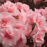 百合が原は花いっぱい