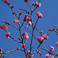 府中郷土の森の春