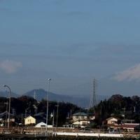 ウソ(鷽) 早戸川林道