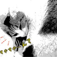 3rdアニバーサリー☆ ニコ