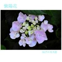 SK 君の写真館、研ぎ澄まされた感性に裏打ちされた画像遊び、季節の花が綺麗です。