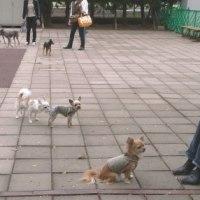 犬は皆同じ by Kawabe