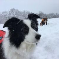 雪道~かまくら~トトロ♪