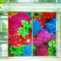 蜷川実花展 ~地上のはな、天上の色~