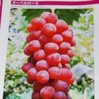 植原葡萄研究所「ブドウ品種解説」2016年版