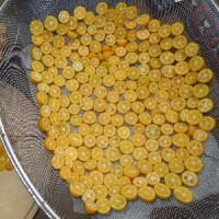 たねなし金柑「ちびまる」収穫、干してドライフルーツに。