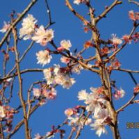 日本語学習 12月19日(日)の学習内容
