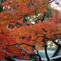 暖国の紅葉
