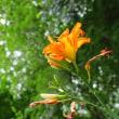 野に咲く花 鳴沢 3