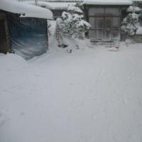 今日も除雪