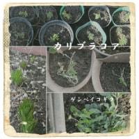 庭で鉢植えの手入れ・・・