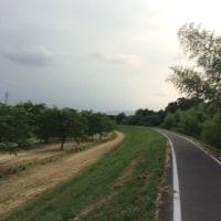 ジョギング 6/11 午後からロードで1時間走行。