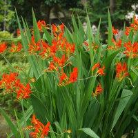 散歩道の花たち