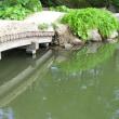 縮景園 園内 木と土の橋 (広島市)